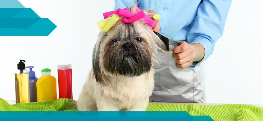 peluqueria-canina2